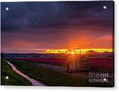 Acrylic Print featuring the photograph Skagit Valley Tractor Sunstar by Mike Reid