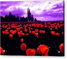 Skagit Valley Tulips Acrylic Print