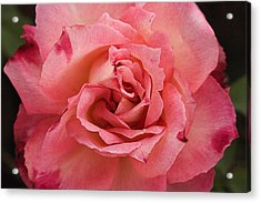 Skc 4942 Pink Harmony Acrylic Print