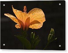 Skc 9937 Grace Of Hibiscus Acrylic Print