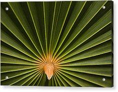 Skc 9959 The Palm Spread Acrylic Print by Sunil Kapadia