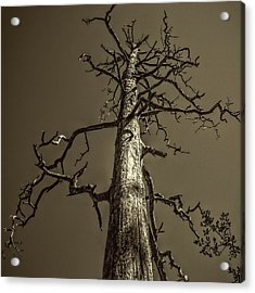 Skeletal Tree Sedona Arizona Acrylic Print