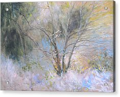 Sketch Of Halation Effect Through Trees Acrylic Print by Harry Robertson