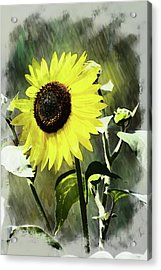 Sketchy Sunflower 2 Acrylic Print by Marty Koch