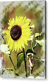 Sketchy Sunflower 3 Acrylic Print by Marty Koch