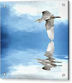 Skimming Acrylic Print