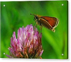 Skipper Acrylic Print by Juergen Roth