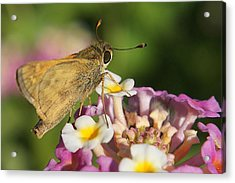 Skippers Keepers Acrylic Print by DiDi Higginbotham