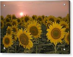 Skn 2178 The Sunflowers At Sunset  Acrylic Print by Sunil Kapadia