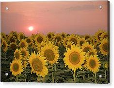Skn 2179 Sunflower Landscape Acrylic Print