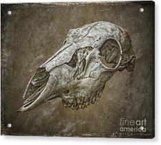 Skull On Brown Texture Acrylic Print