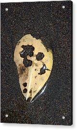 Skull Shell Acrylic Print by Jez C Self