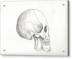Skull Study Acrylic Print