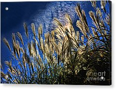Sky Dusters Acrylic Print