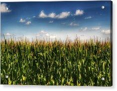 2005 - Sky High Corn Acrylic Print