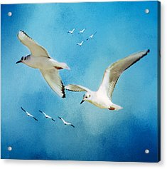 Sky High Flight Acrylic Print