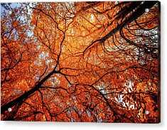 Sky Roots In Forest Red Acrylic Print