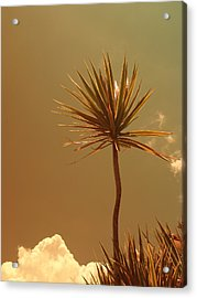 Skyward Bound Acrylic Print by Florene Welebny