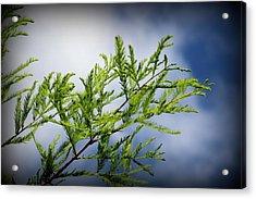 Skyward Acrylic Print by Carolyn Stagger Cokley