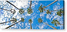 Skyward Palms Acrylic Print by Az Jackson