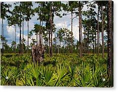 Slash Pine And Saw Palmetto Acrylic Print by Steven Scott