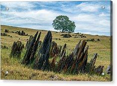Slate Filled Meadow Acrylic Print