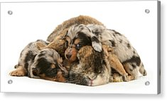 Sleep In Camouflage Acrylic Print