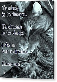 Sleep On Acrylic Print by DazzleMe Photography