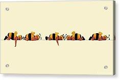 Sleeping Bees Acrylic Print