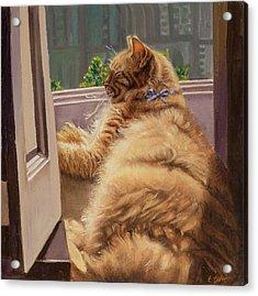 Sleeping Cat Acrylic Print by Barbara Tyler Ahlfield