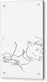 Sleeping Cat II Acrylic Print by Leela Payne