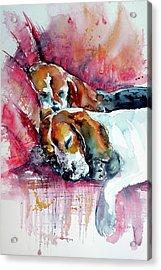 Sleeping Dogs Acrylic Print