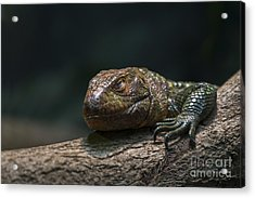 Sleeping Dragon Acrylic Print