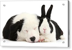 Sleeping In Black And White Acrylic Print