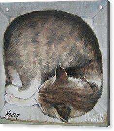 Sleeping Kitty Acrylic Print by Jindra Noewi
