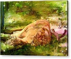 Sleeping Lionness Pushy Squirrel Acrylic Print