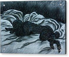 Sleeping Poodle Acrylic Print by Terri Mills
