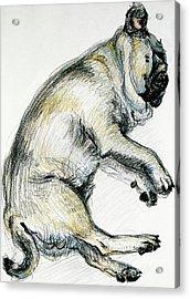 Sleeping Pug One Acrylic Print
