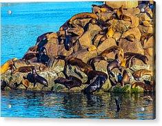 Sleeping Sea Lions Acrylic Print by Garry Gay