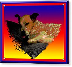 Sleeping Soundly Acrylic Print by One Rude Dawg Orcutt
