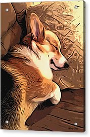 Banjo The Sleeping Welsh Corgi Acrylic Print by Kathy Kelly