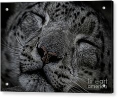 Sleepy Cat Acrylic Print by Brad Allen Fine Art