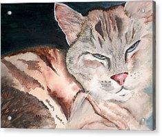 Sleepy Cat Acrylic Print