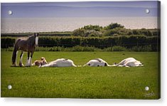 Sleepy Gypsy Afternoon By The Water Acrylic Print by Elizabeth Sescilla