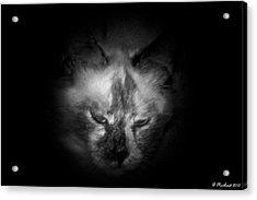 Acrylic Print featuring the photograph Sleepy Head by Betty Northcutt