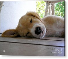 Sleepy Jojo Acrylic Print by Barbara Marcus