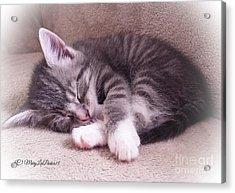Sleepy Kitten Bymaryleeparker Acrylic Print by MaryLee Parker