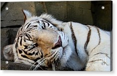 Sleepy Kitty Acrylic Print