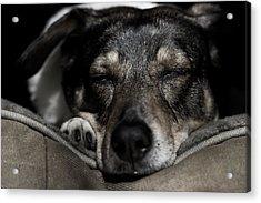 Sleepy Lil Hound Acrylic Print