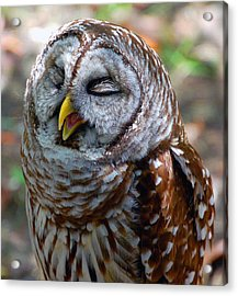 Acrylic Print featuring the photograph Sleepy Owl by Donna Proctor